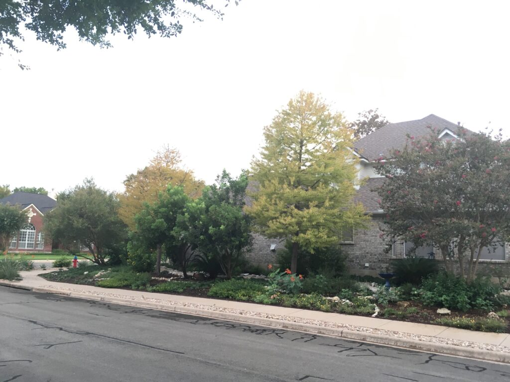 Big trees on a residential area